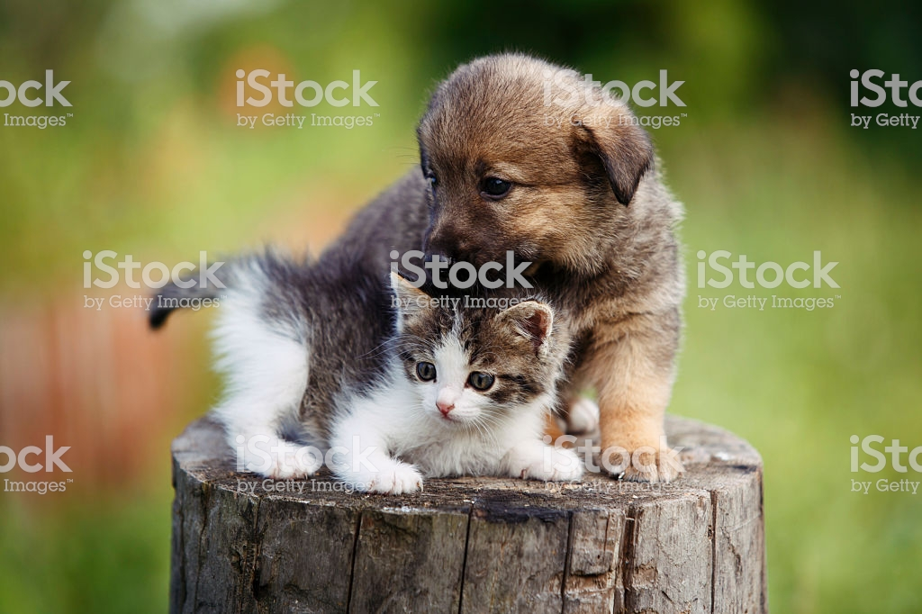 1024x682 - Cute Puppy and Kitten 36