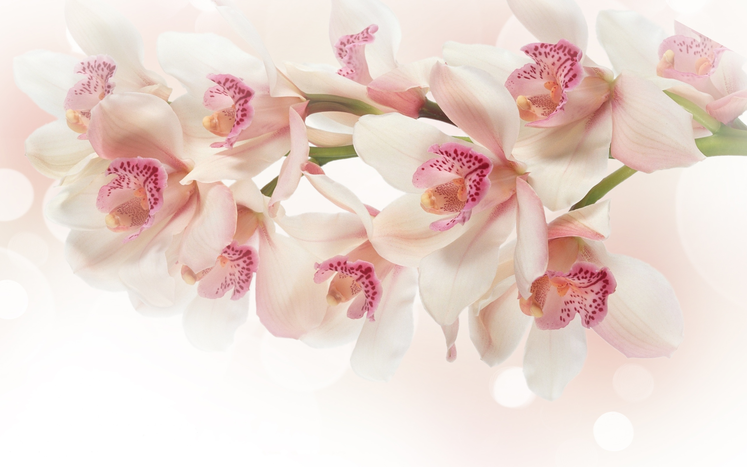 Orchid Wallpapers 36 Images Dodowallpaper