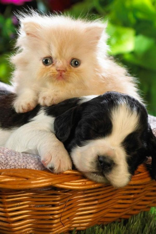 600x900 - Cute Puppy and Kitten 26