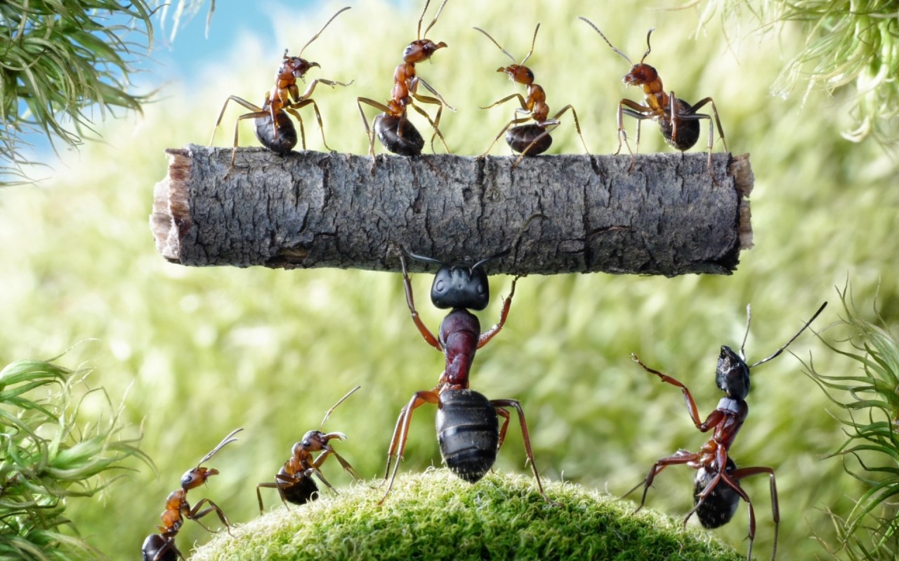 1280x800 - Ant Wallpapers 6