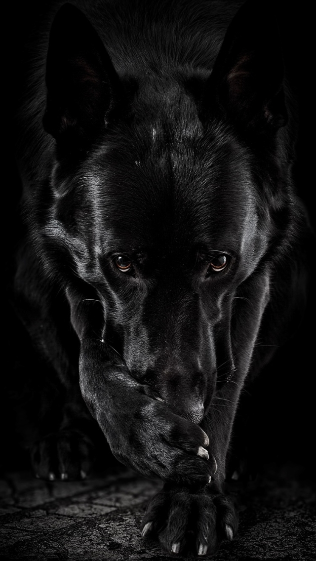 640x1136 - Wallpaper Dogs Black and White 53
