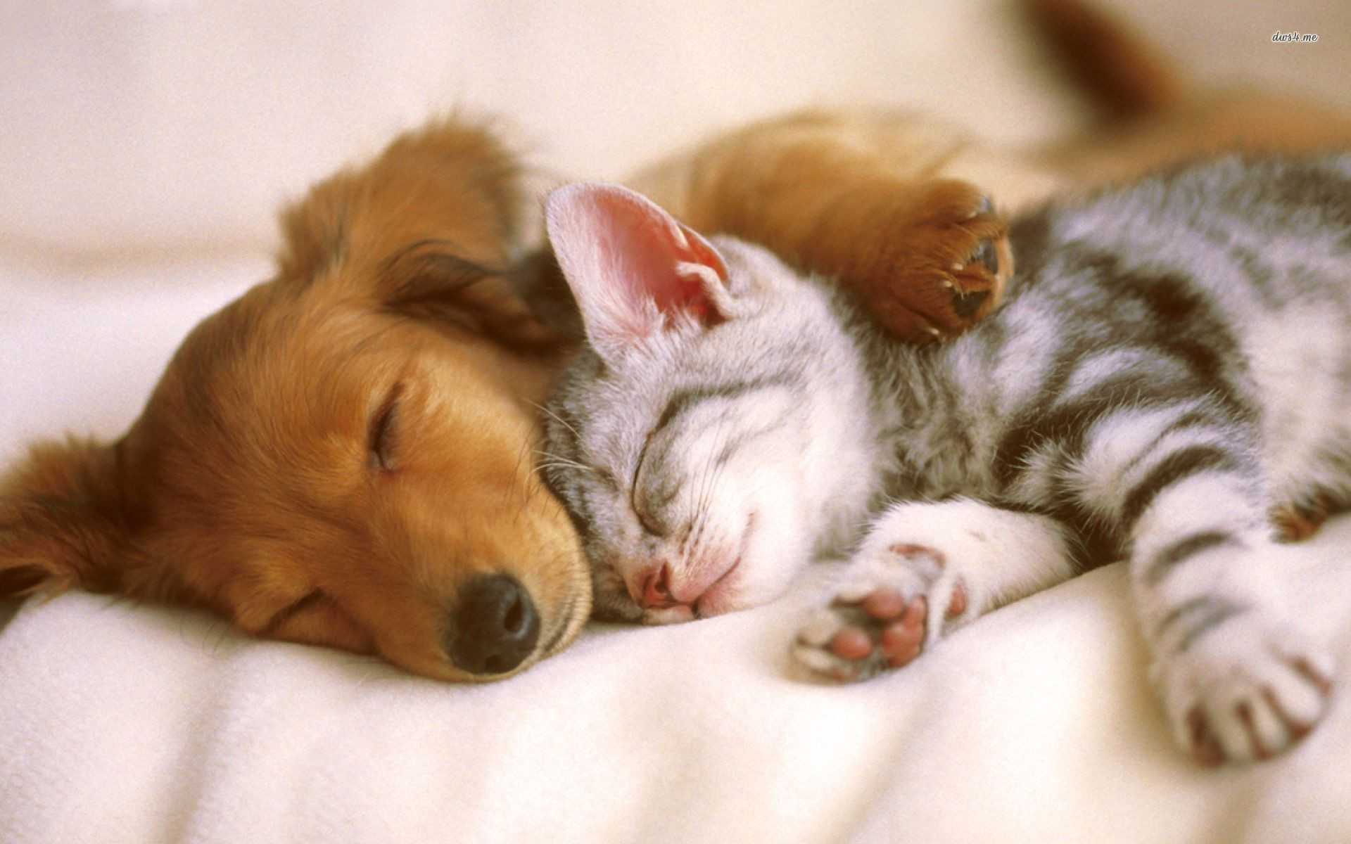 1920x1200 - Cute Puppy and Kitten 34