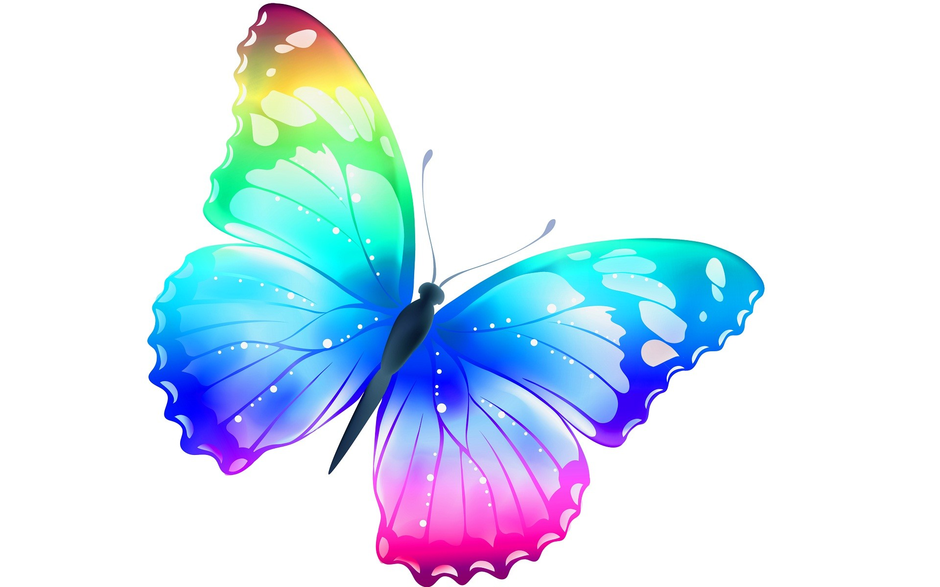 1920x1200 - Pretty Butterfly Backgrounds 47