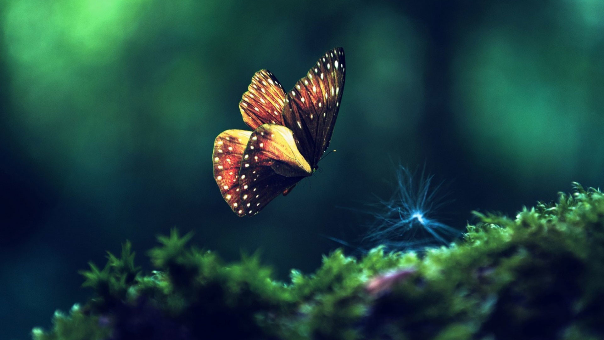 1920x1080 - Pretty Butterfly Backgrounds 4