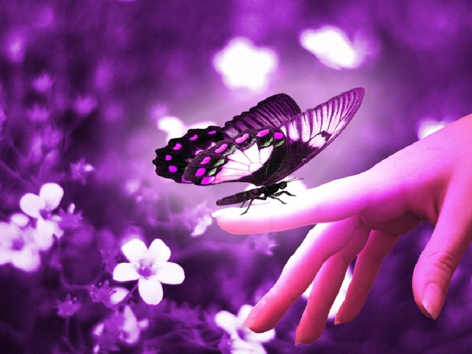 1600x1200 - Pretty Butterfly Backgrounds 19