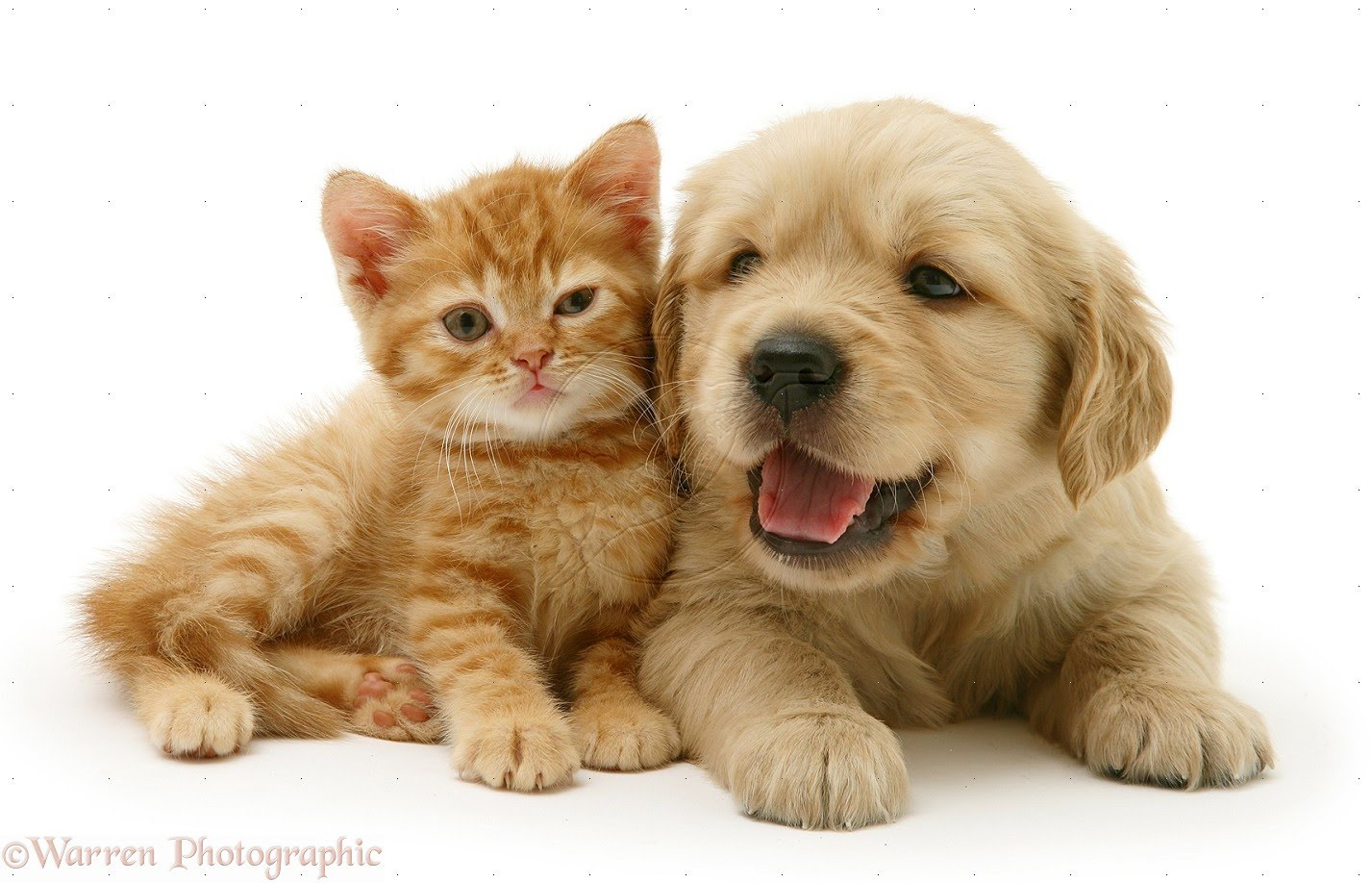 1427x918 - Cute Puppy and Kitten 16