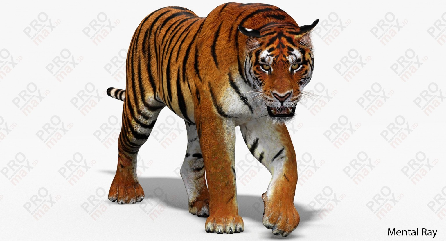 1536x830 - Animated Tiger 20