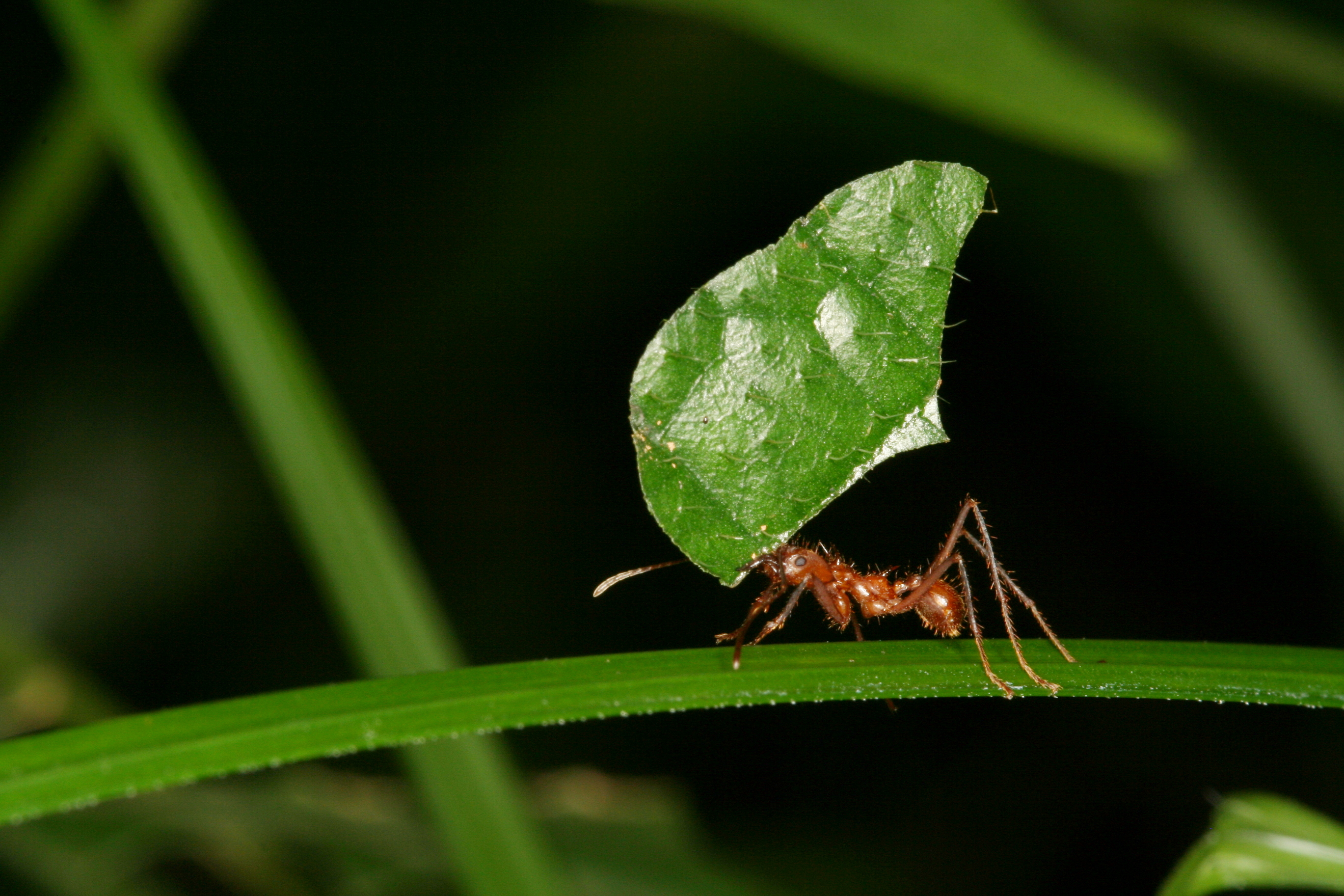 2738x1825 - Ant Wallpapers 21