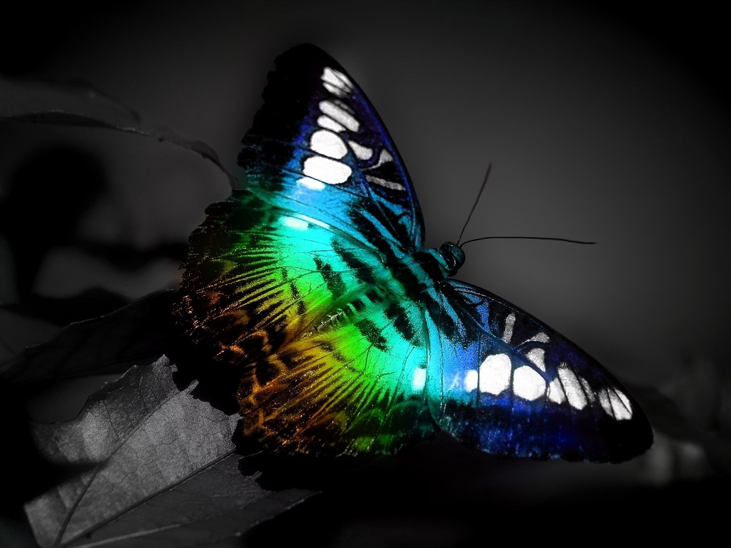 2560x1920 - Pretty Butterfly Backgrounds 40