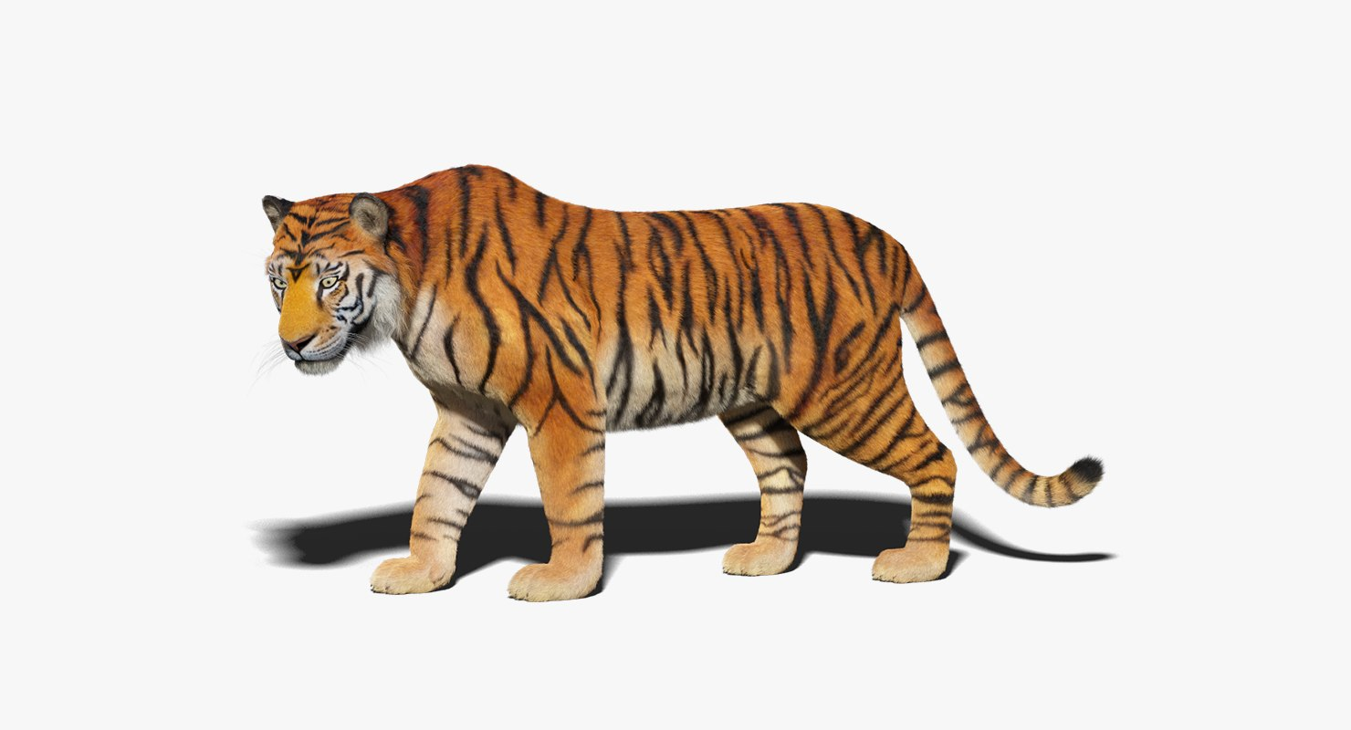 1480x800 - Animated Tiger 18