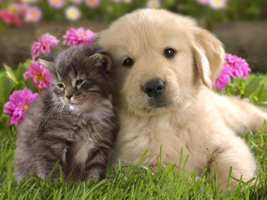 1024x768 - Cute Puppy and Kitten 2