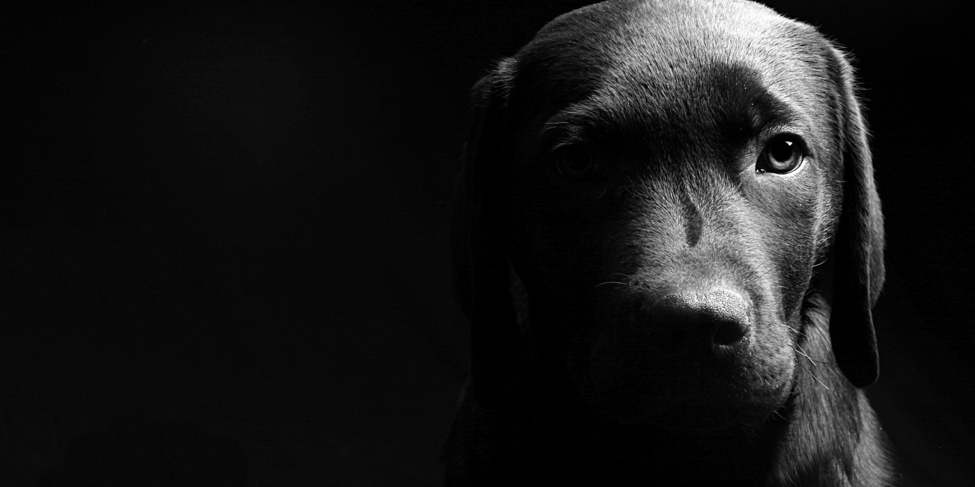 2000x1000 - Wallpaper Dogs Black and White 34