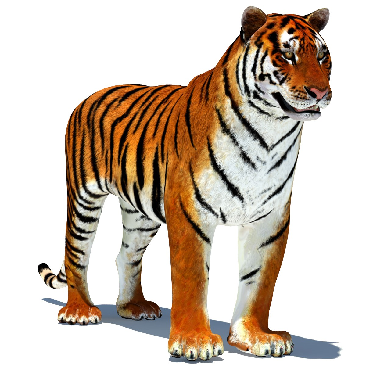 1200x1200 - Animated Tiger 24