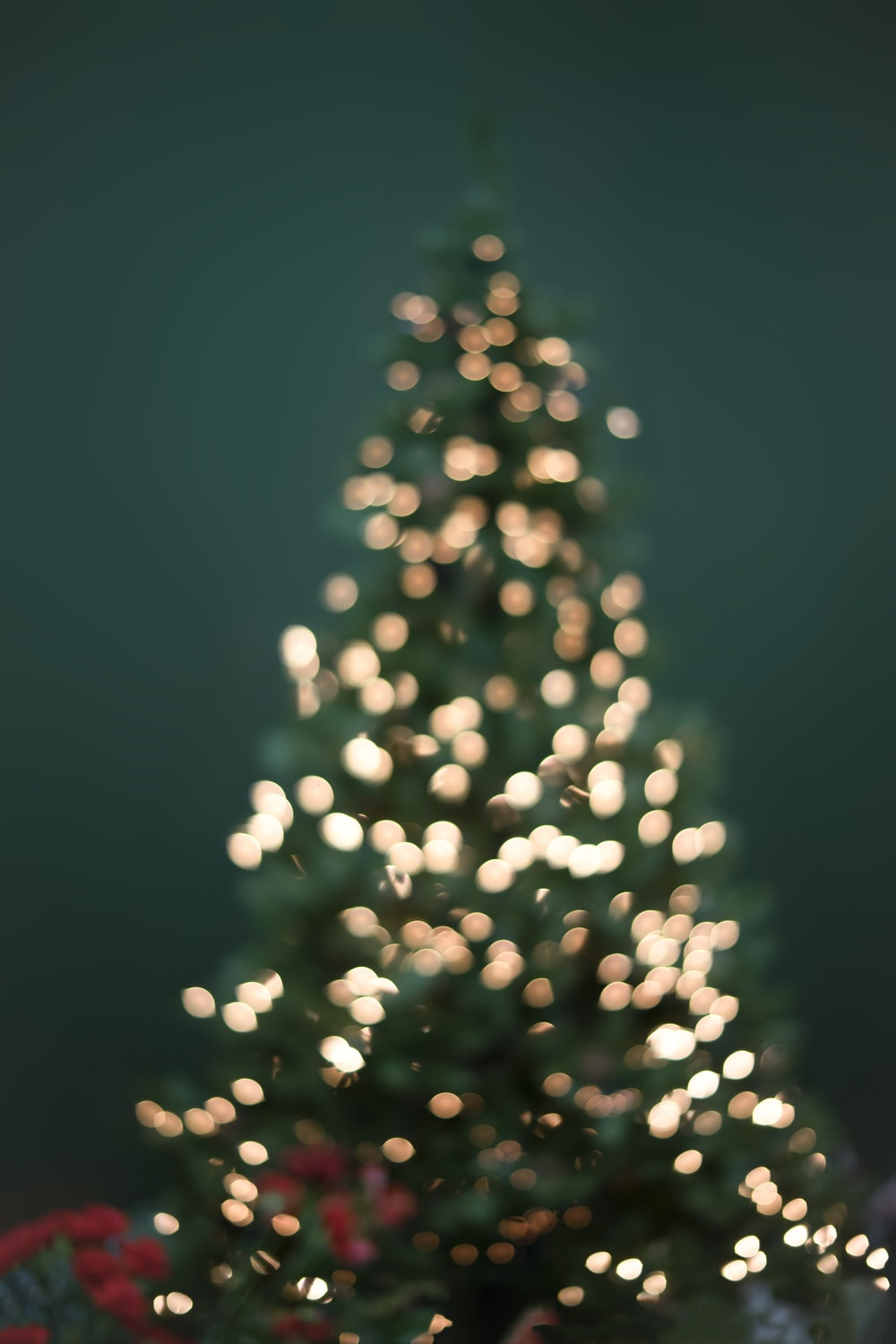 1000x1500 - Christmas Trees Backgrounds 5