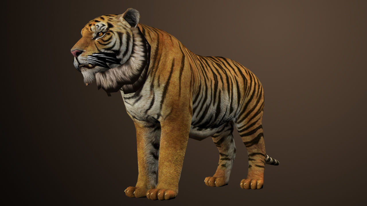 1280x720 - Animated Tiger 37