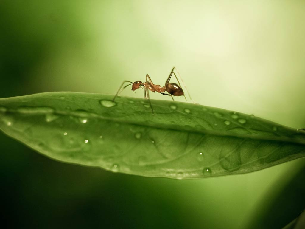 1024x768 - Ant Wallpapers 4
