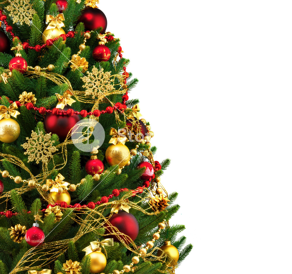 1000x939 - Christmas Trees Backgrounds 30