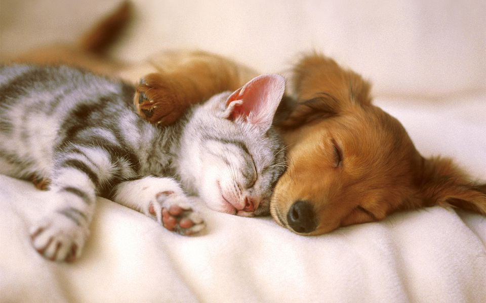 960x600 - Cute Puppy and Kitten 1