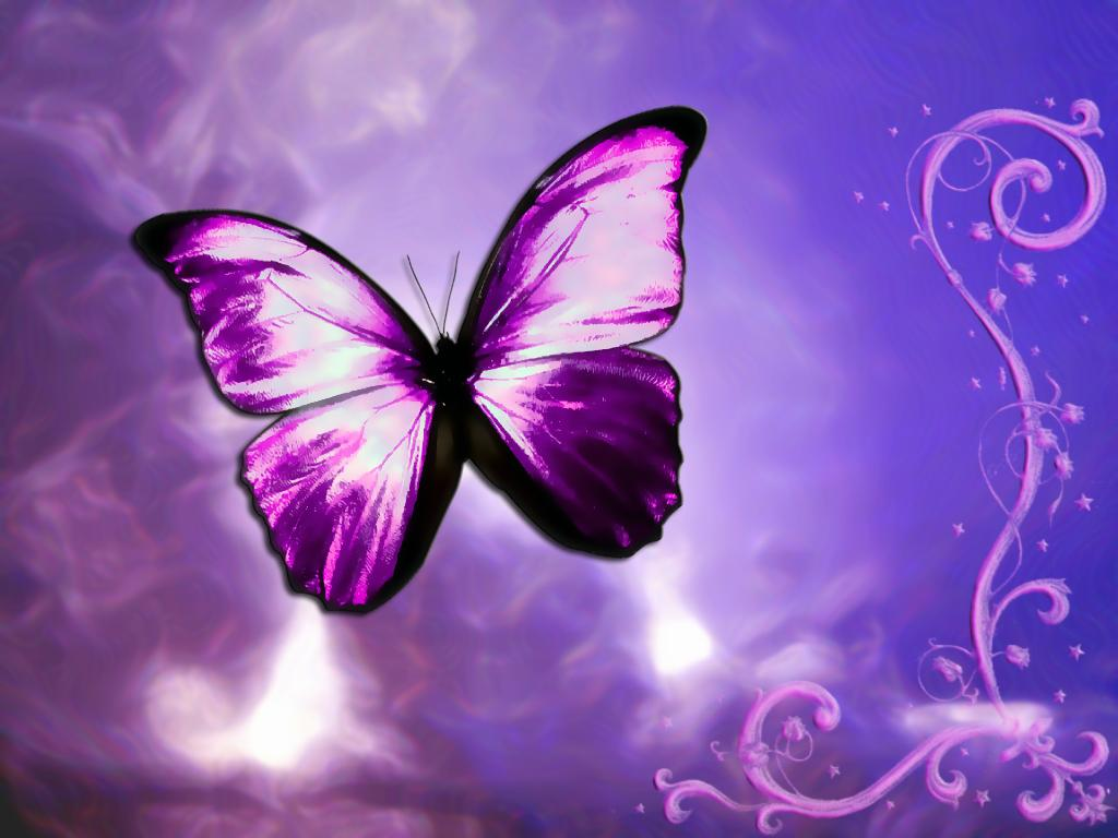 1024x768 - Pretty Butterfly Backgrounds 42