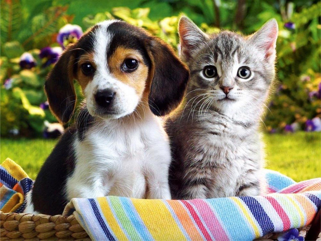 1366x1024 - Cute Puppy and Kitten 7