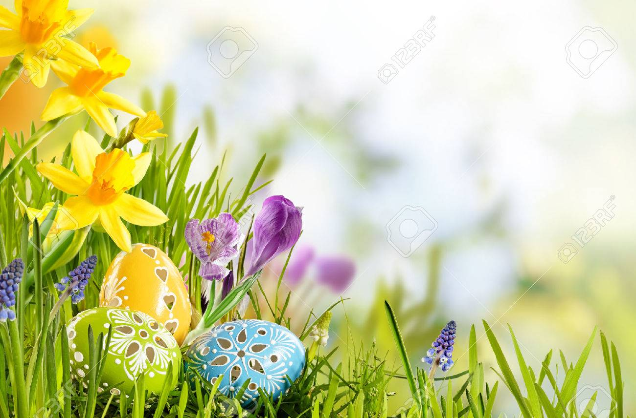 Spring Meadow 48 Images Dodowallpaper