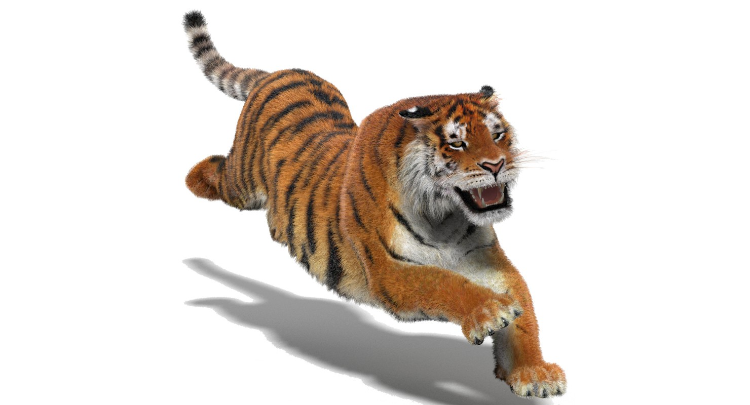 1480x800 - Animated Tiger 19