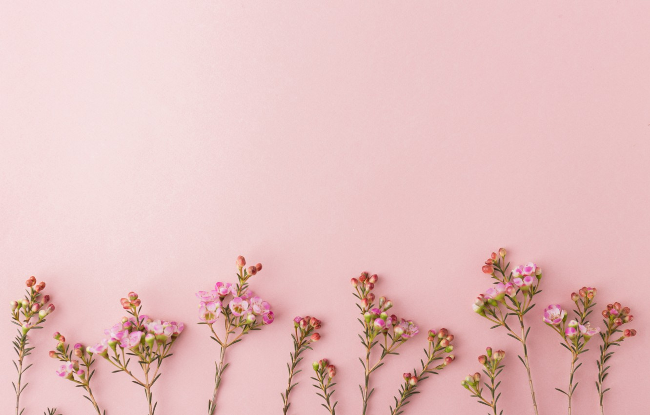 1332x850 - Background Pink 19