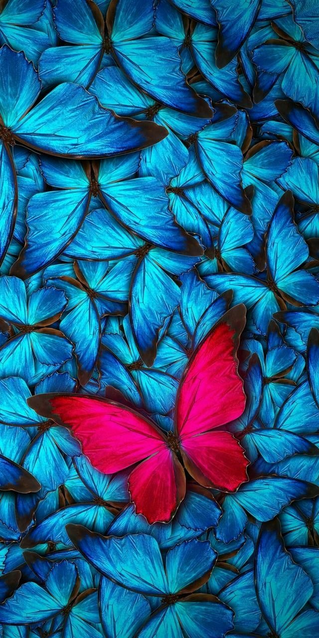 640x1280 - Pretty Butterfly Backgrounds 15