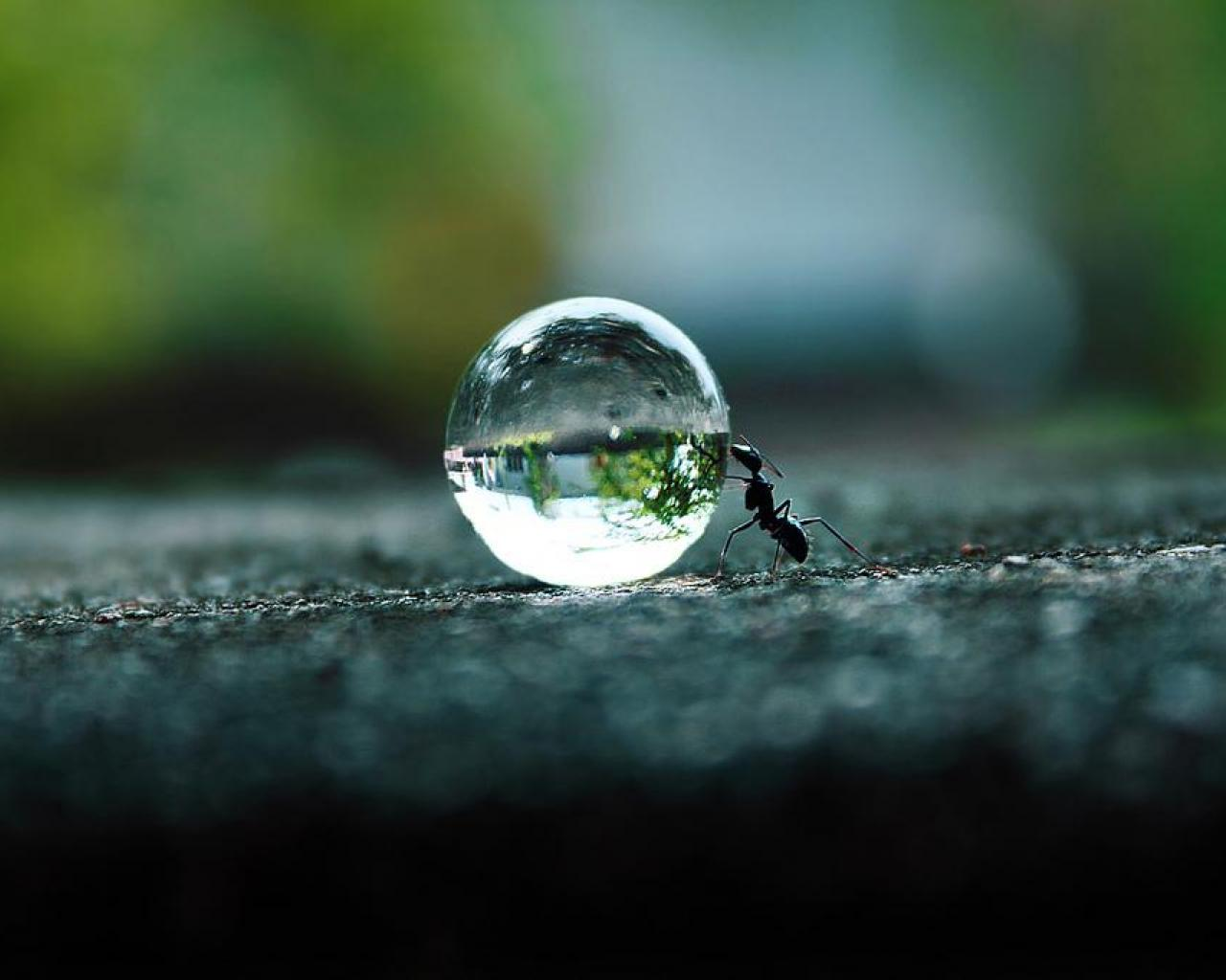 1280x1024 - Ant Wallpapers 3