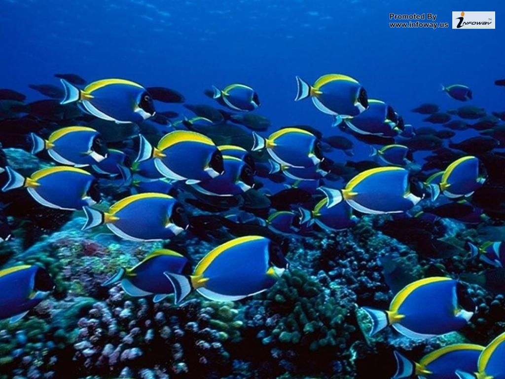 1024x768 - Blue Ocean Wallpaper with Fish 10
