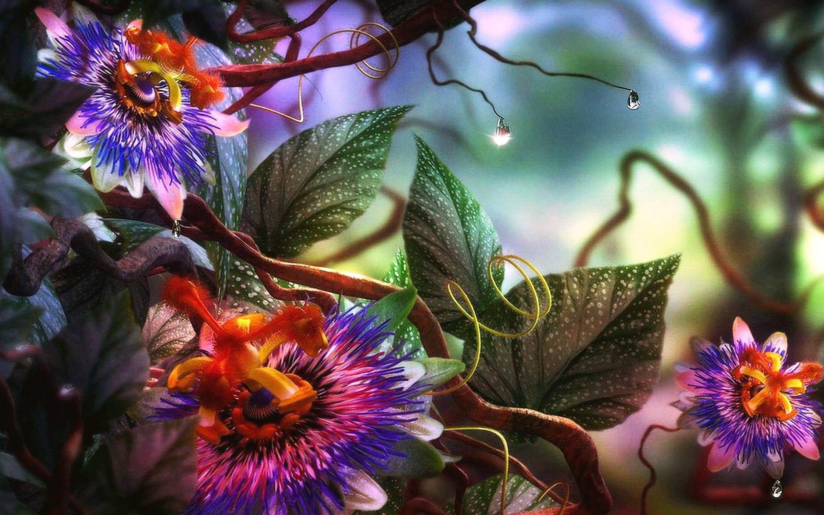 1680x1050 - Passion Flower Wallpapers 14