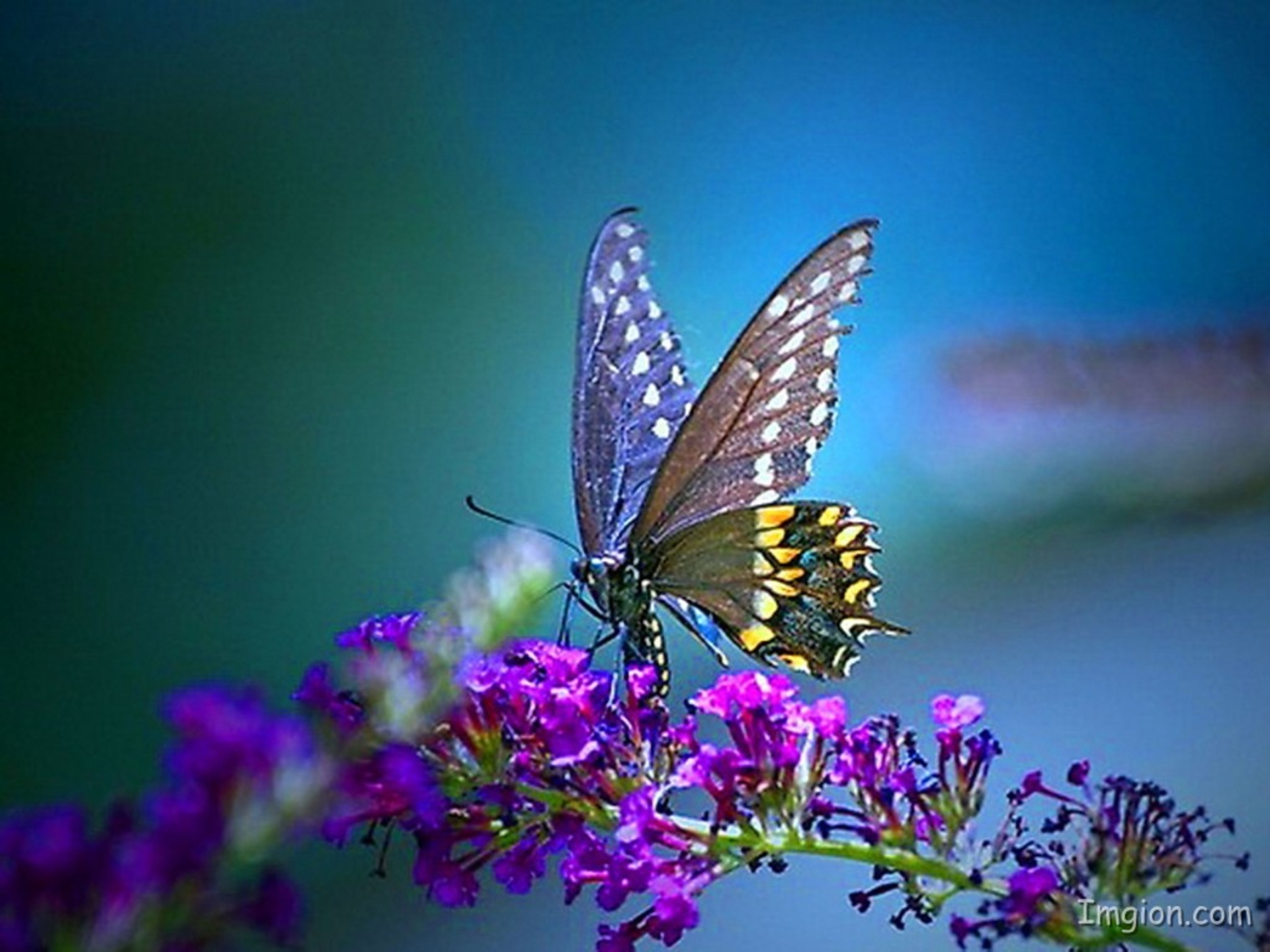1920x1440 - Pretty Butterfly Backgrounds 3