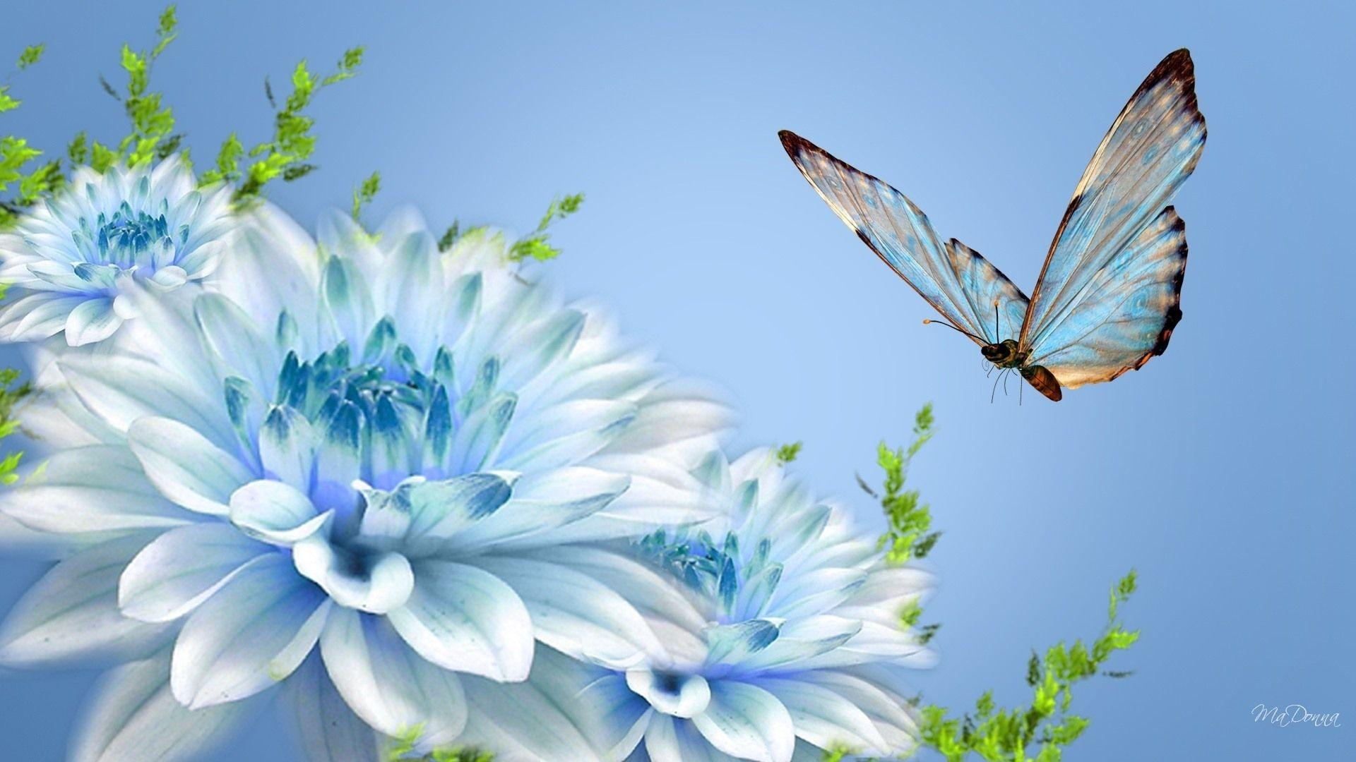 1920x1080 - Pretty Butterfly Backgrounds 12