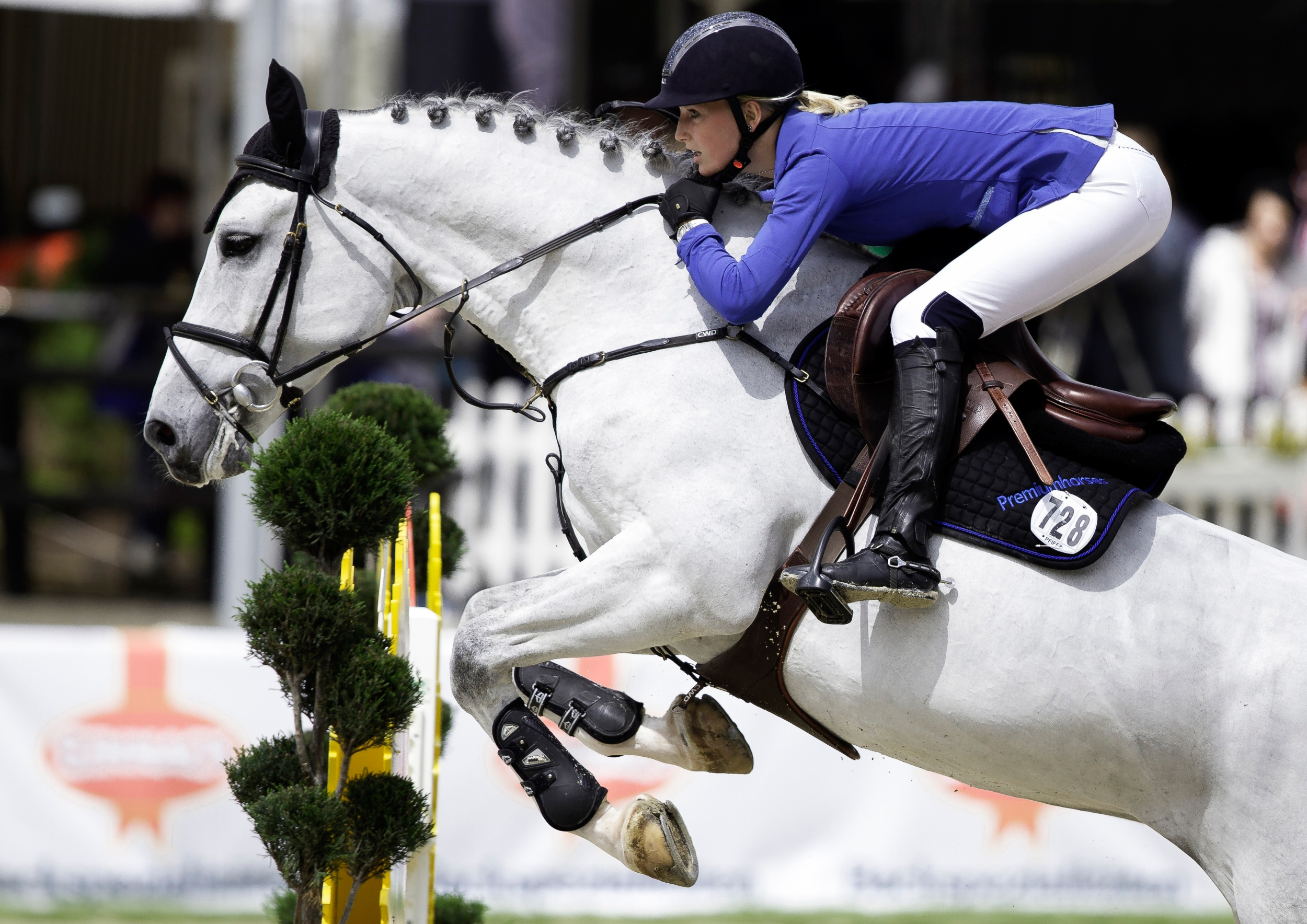 2500x1768 - Show Jumping Wallpapers 2