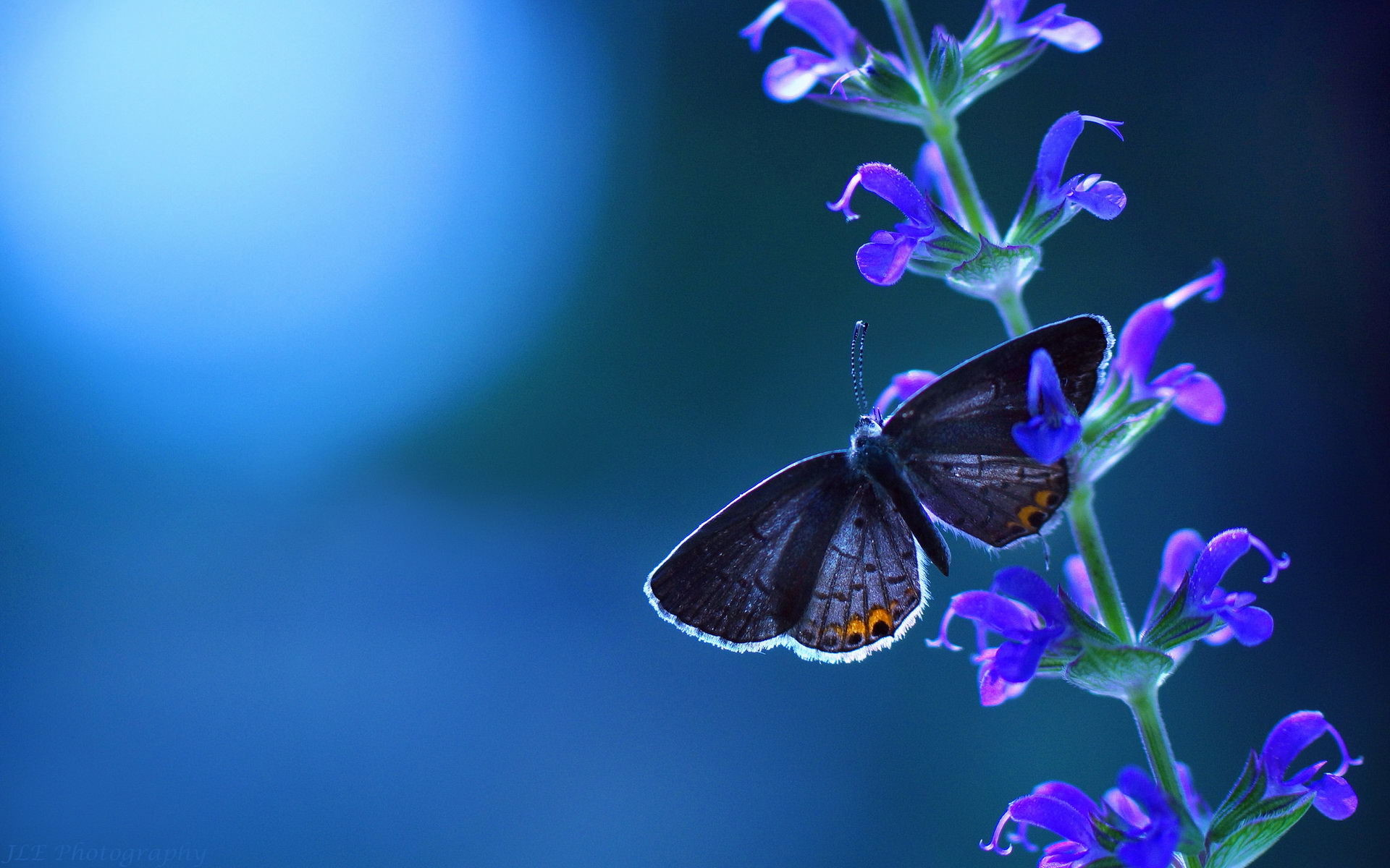 1920x1200 - Pretty Butterfly Backgrounds 36