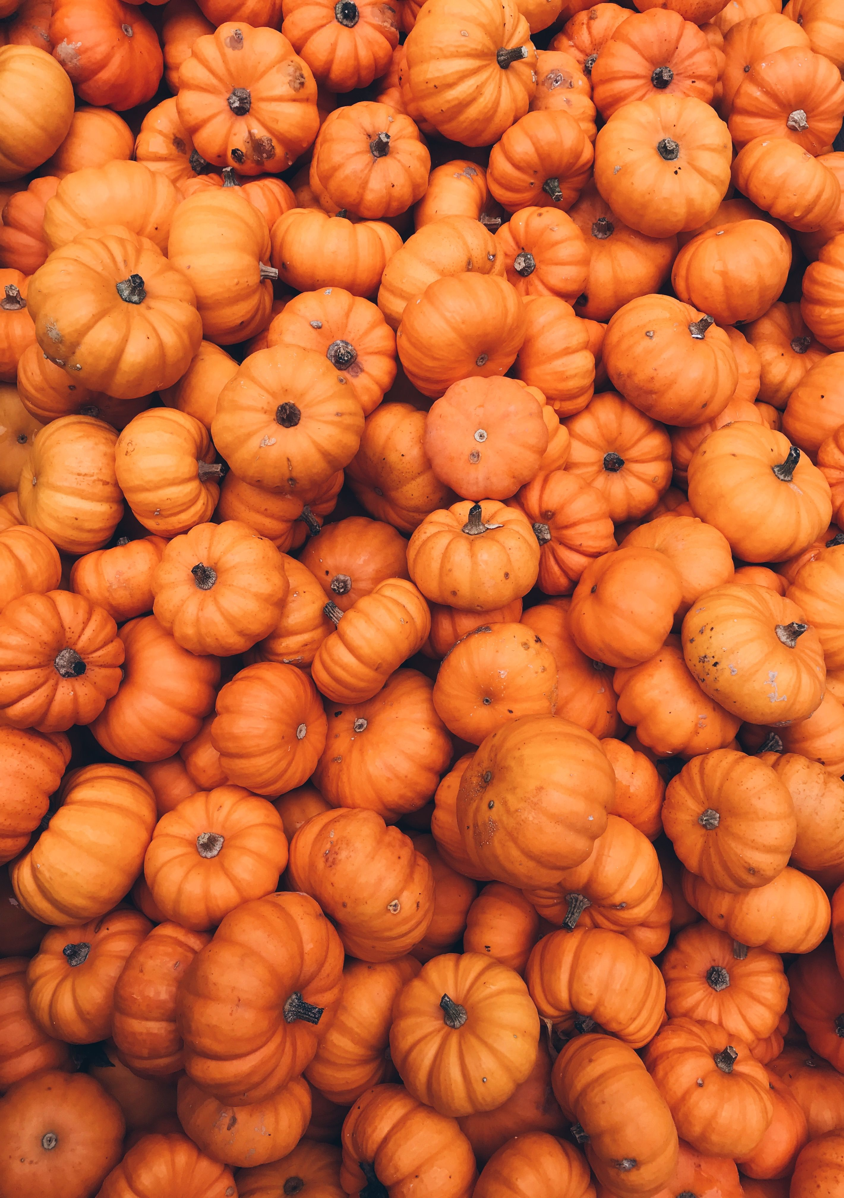 Fall Wallpapers With Pumpkins 46 Images Dodowallpaper