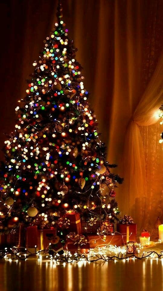 540x960 - Christmas Trees Backgrounds 9