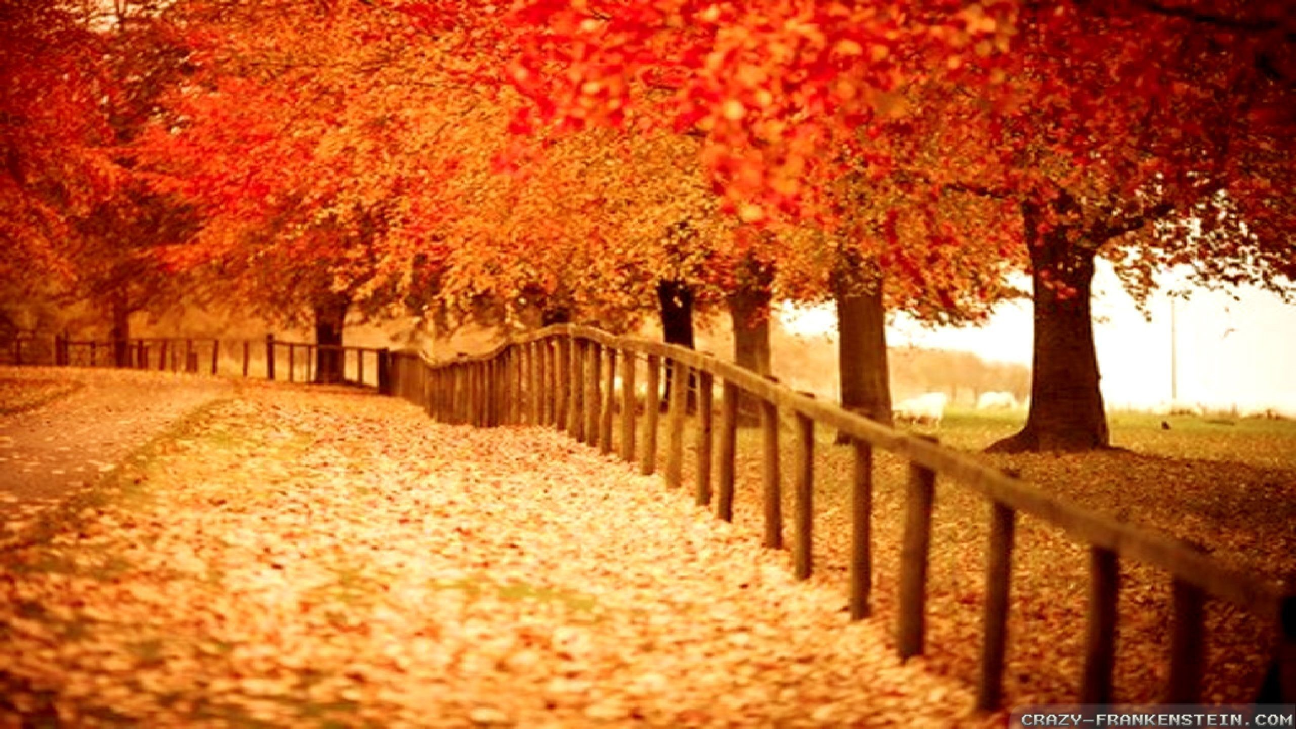 2560x1440 - Fall Wallpapers for Computers 55