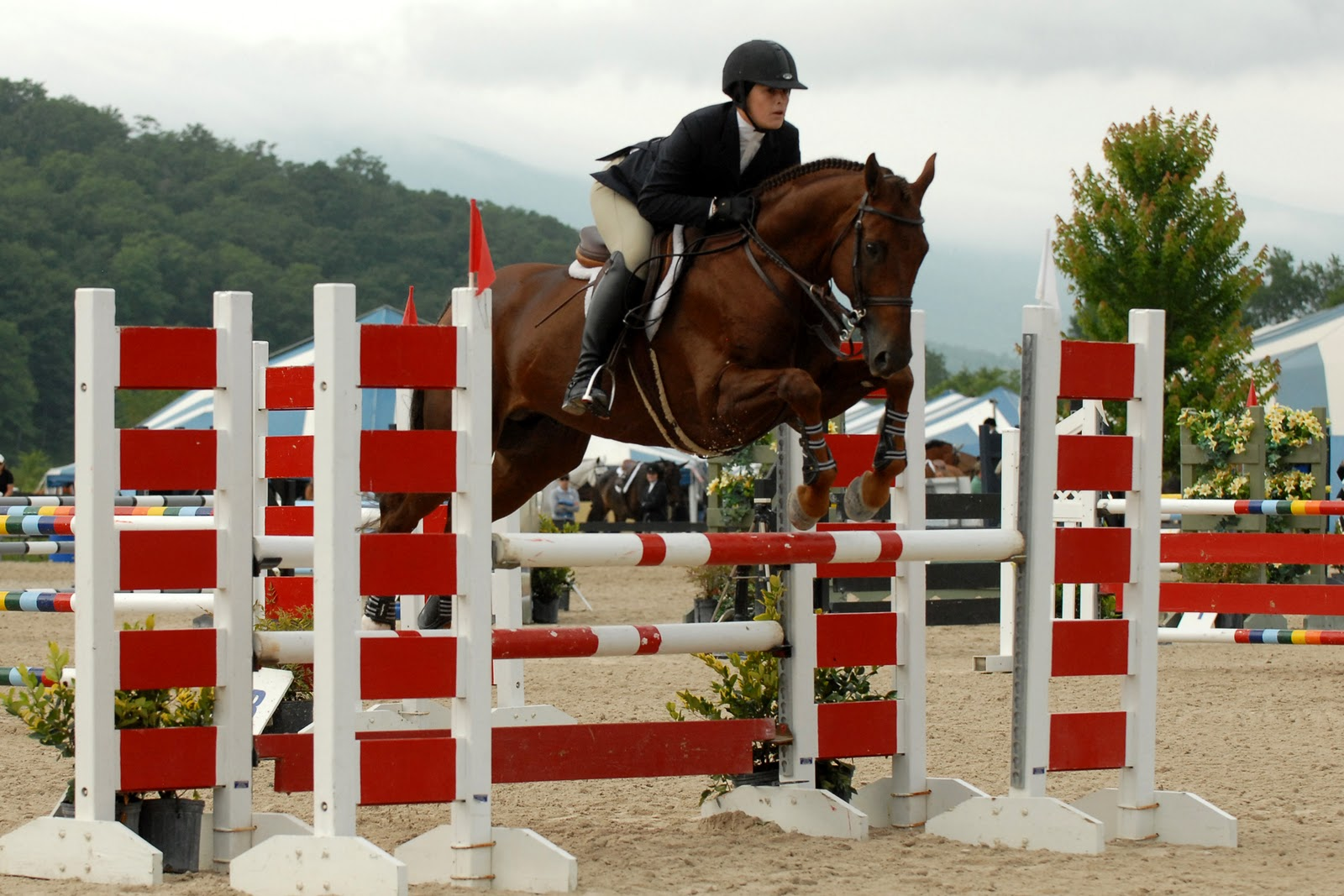 1600x1067 - Show Jumping Wallpapers 4