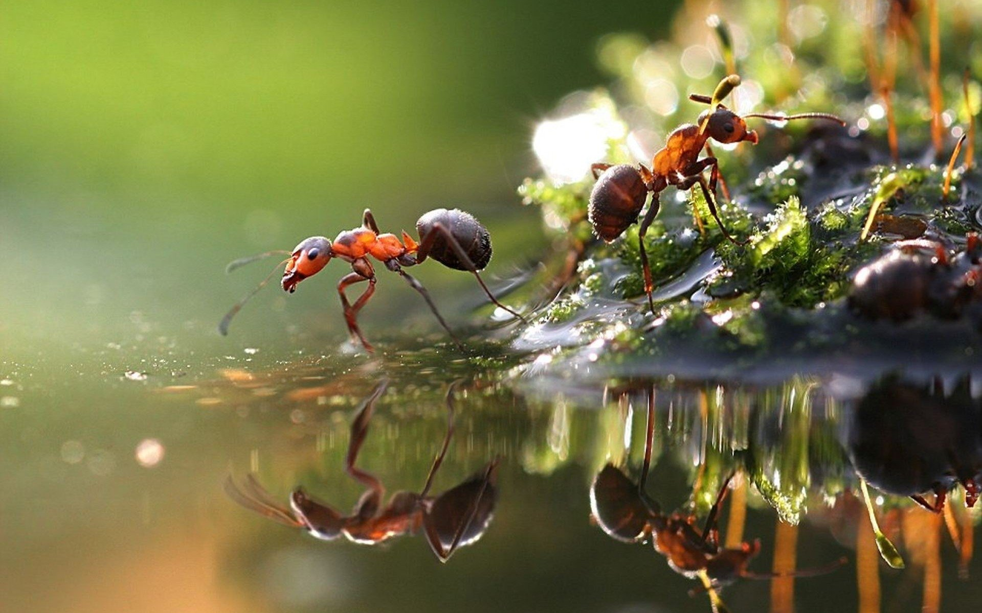 1920x1200 - Ant Wallpapers 1