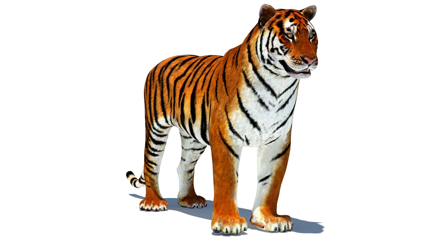 1480x800 - Animated Tiger 3