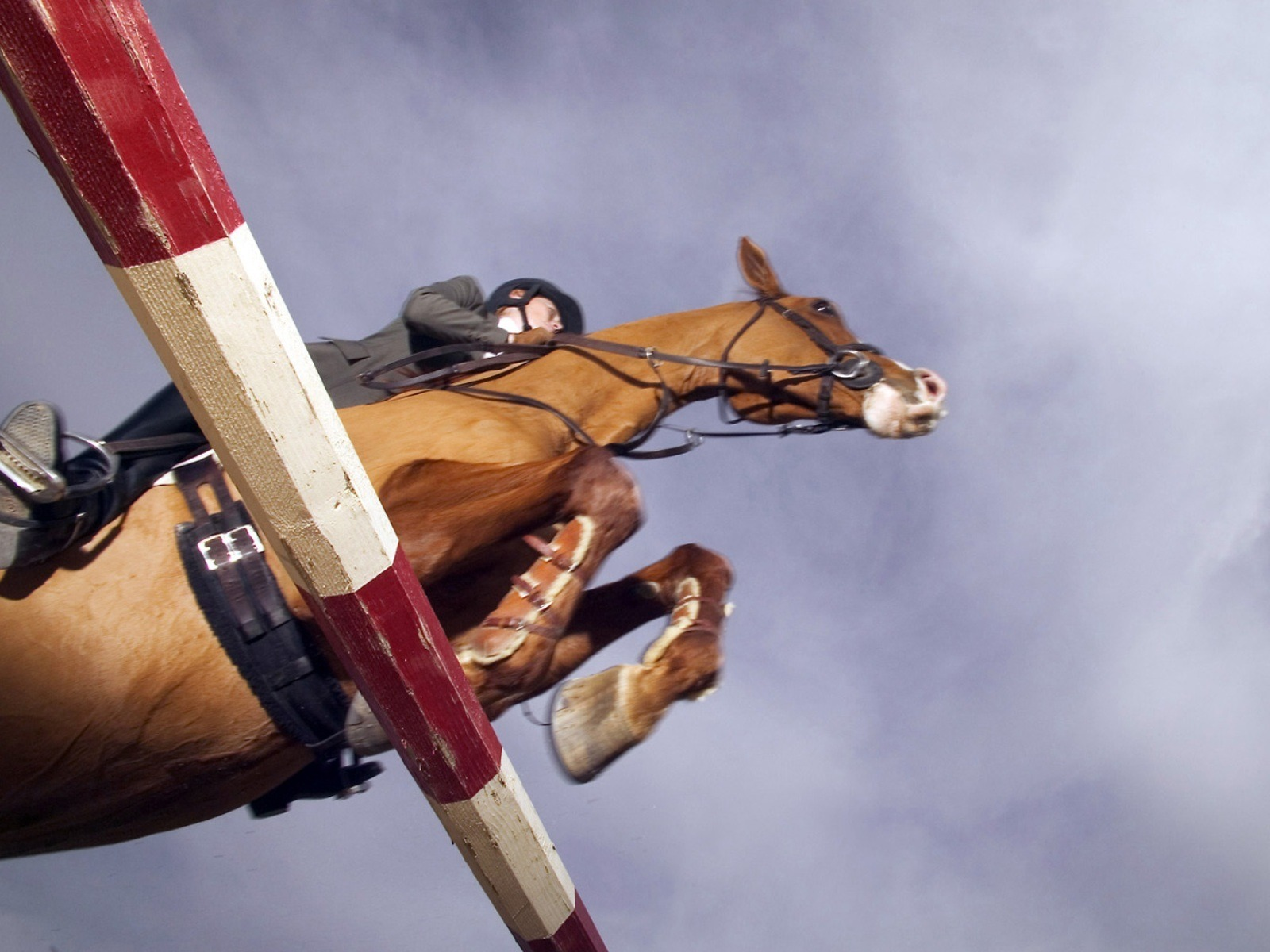 1600x1200 - Show Jumping Wallpapers 32