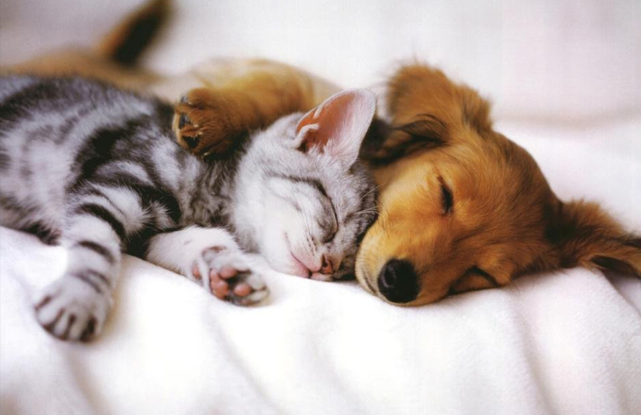 934x605 - Cute Puppy and Kitten 19