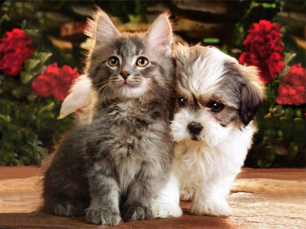 1024x768 - Cute Puppy and Kitten 29