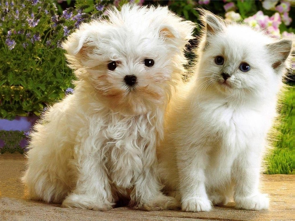 1024x768 - Cute Puppy and Kitten 14