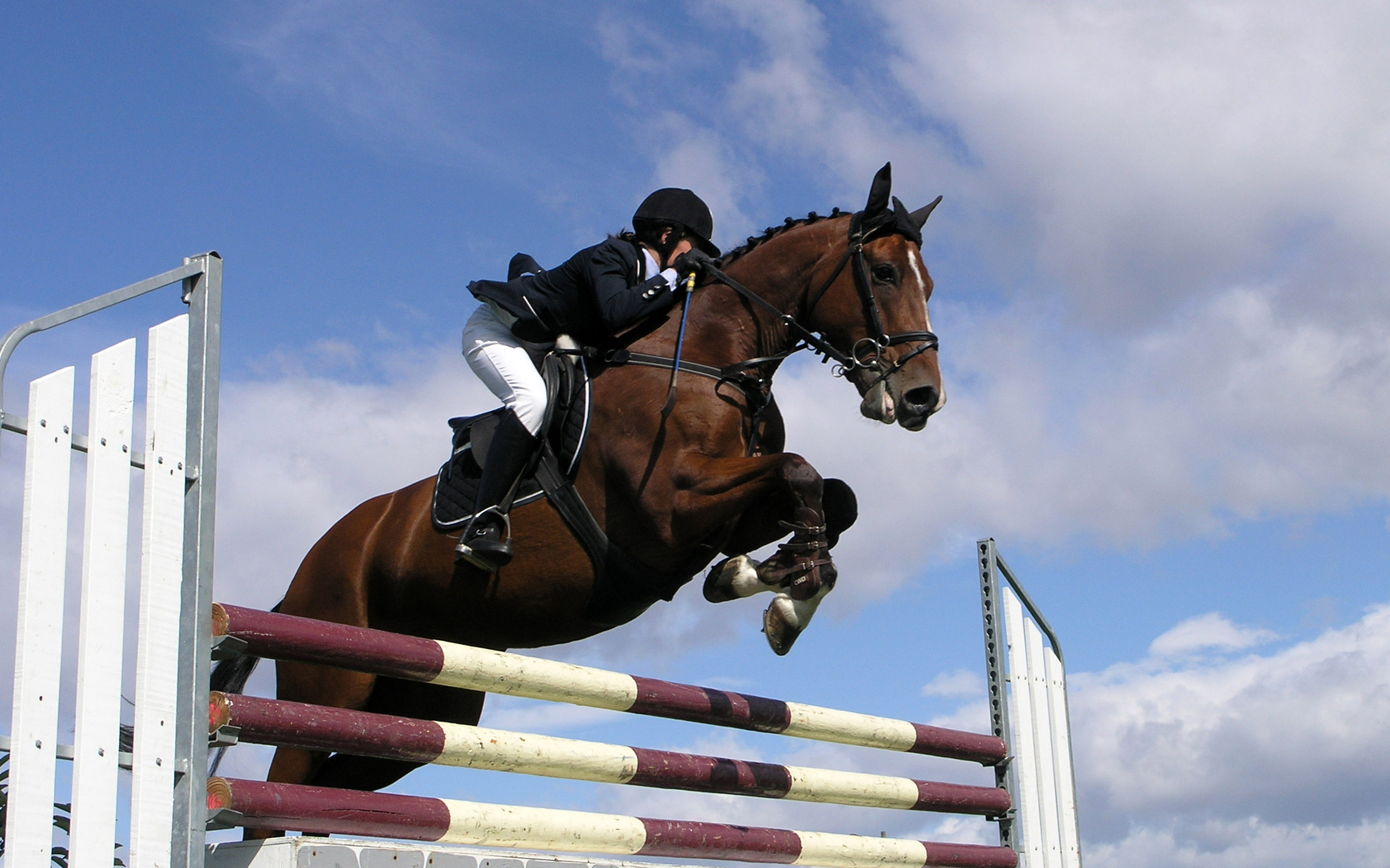 2560x1600 - Show Jumping Wallpapers 8