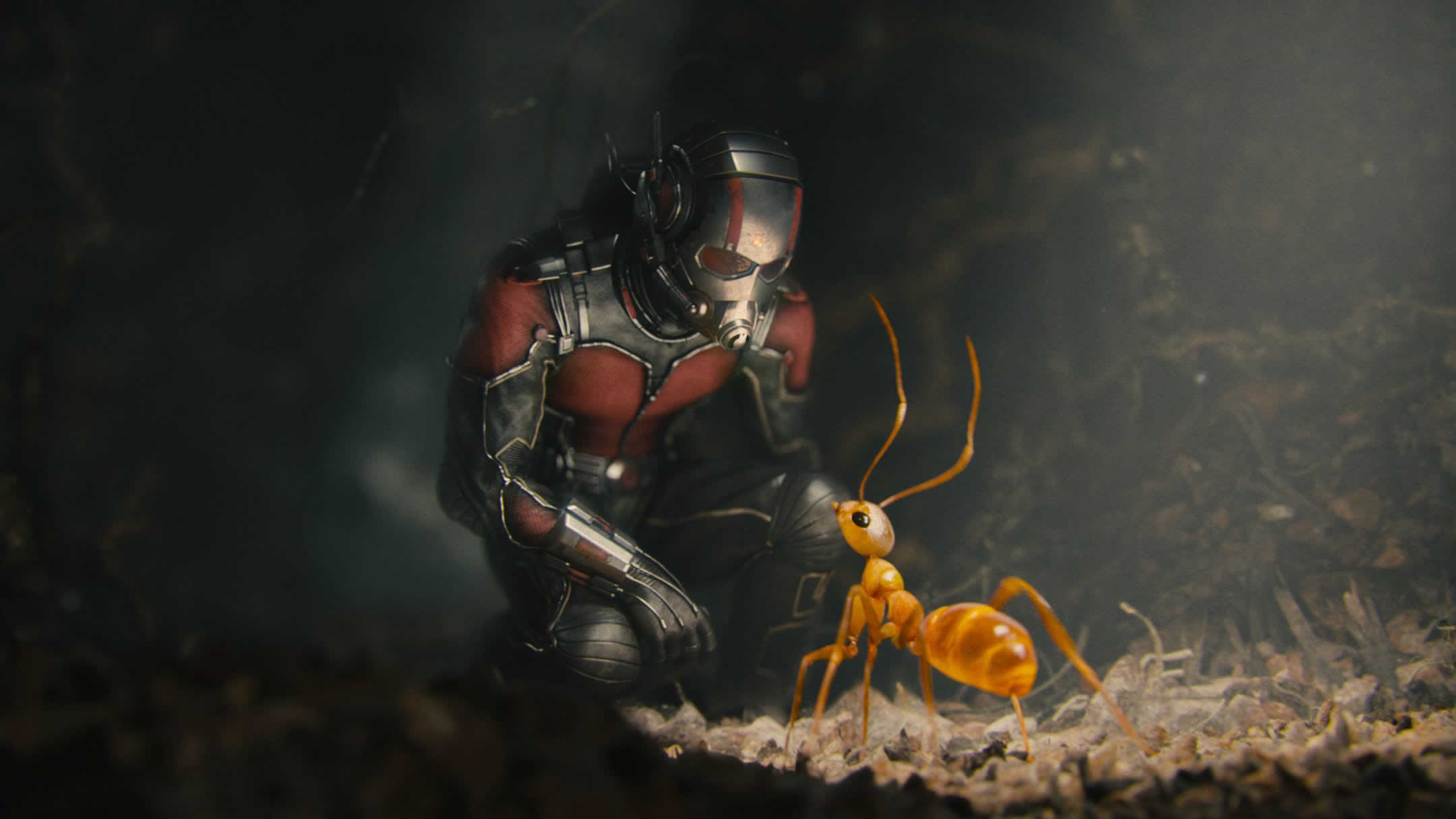 2160x1216 - Ant Wallpapers 24