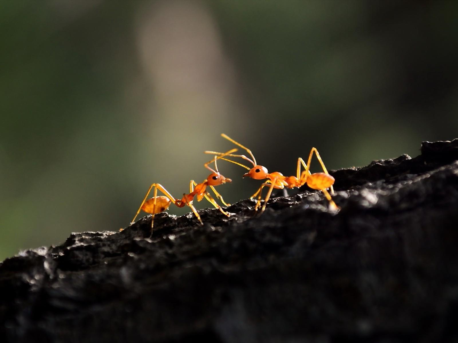 1600x1200 - Ant Wallpapers 33