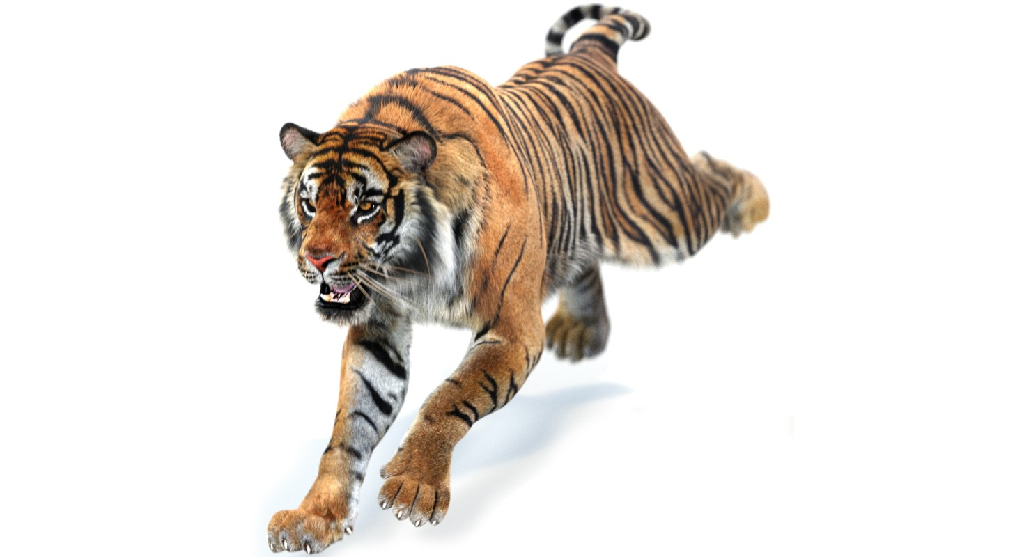 1480x800 - Animated Tiger 15
