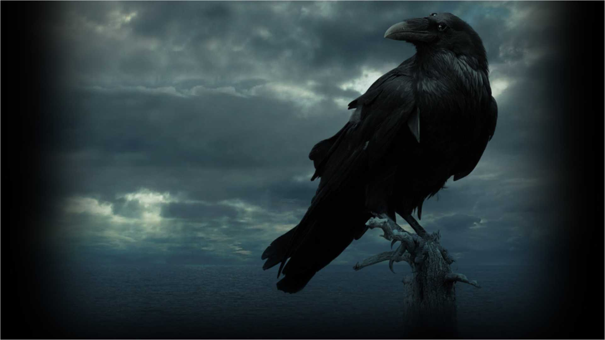 1922x1082 - Raven Wallpapers 1